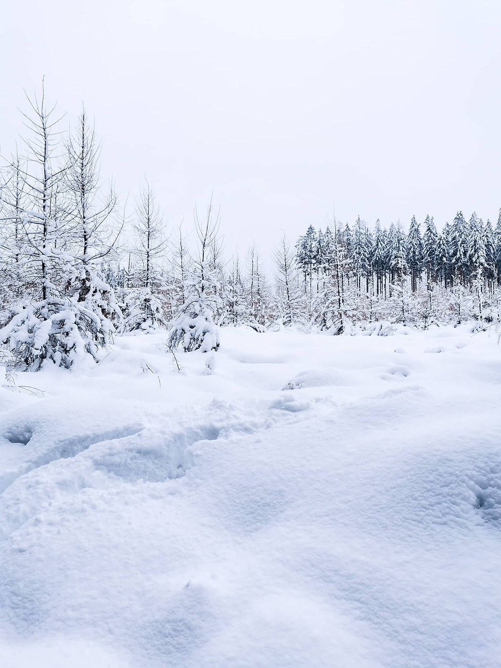 Snowy forest in the Belgian Ardennes