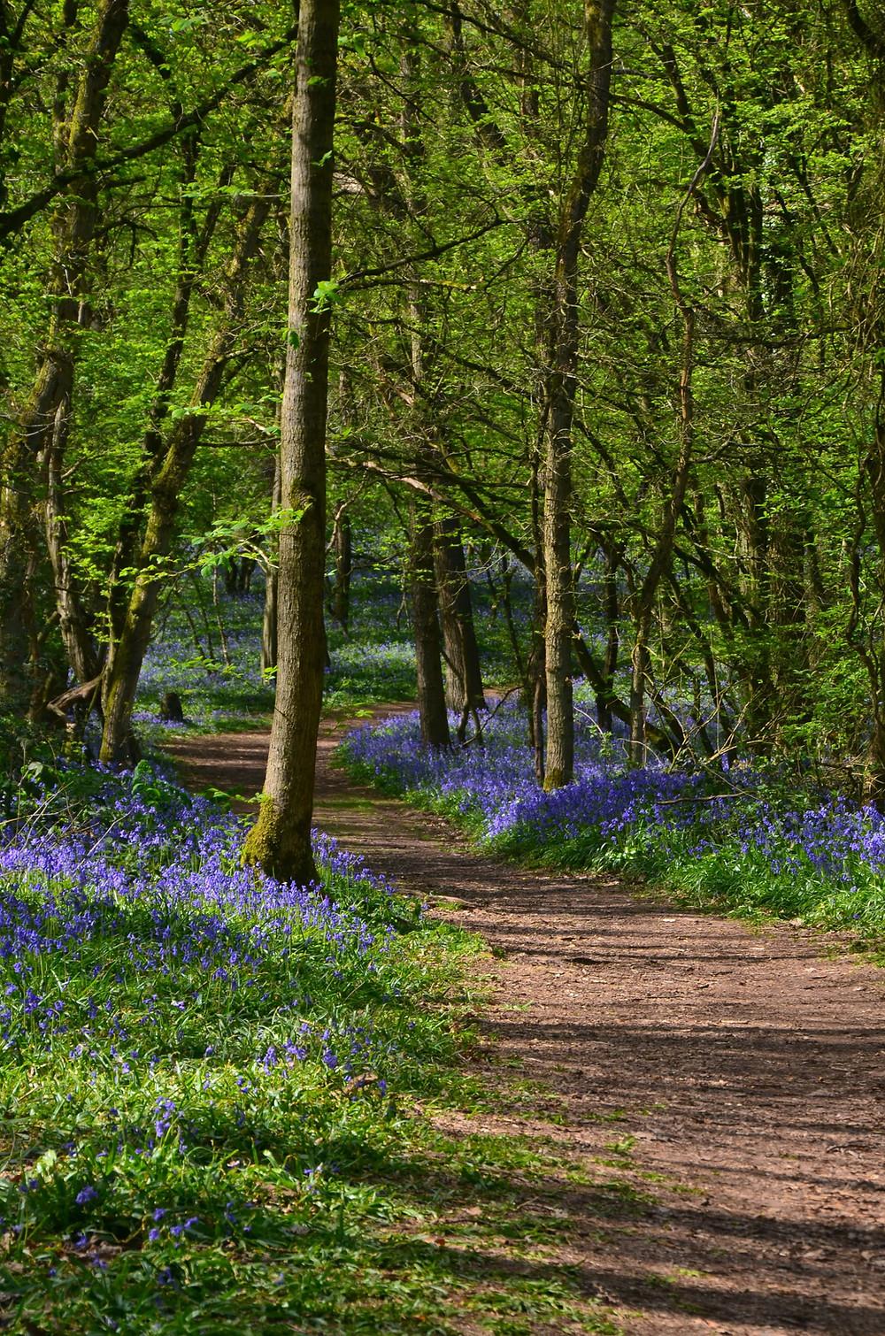 hyacinth forest