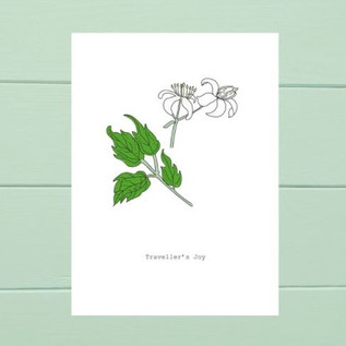 'Traveller's Joy' Wildflower Print