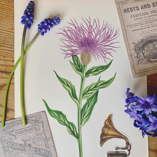 ems-vintage-prints-antique-botanical