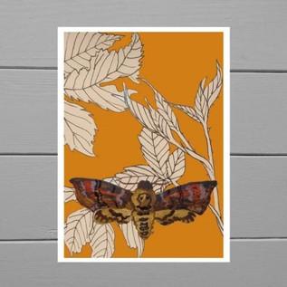 'Dead Head Moth' Giclée Print