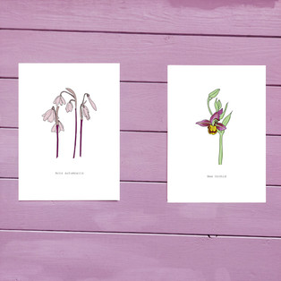 Acis Autumnalis or Bee Orchid Print (18x13cm) by Duck Egg Design Co