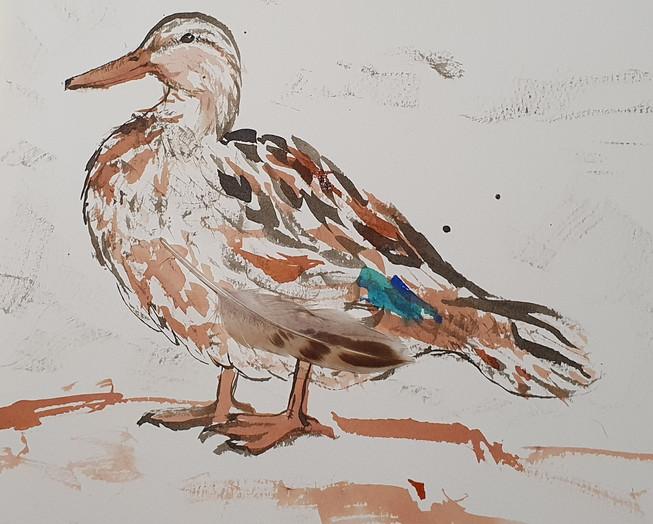 emily-jolley-mallard-painting.jpg