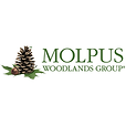 SQUARE PINE - Molpus.png