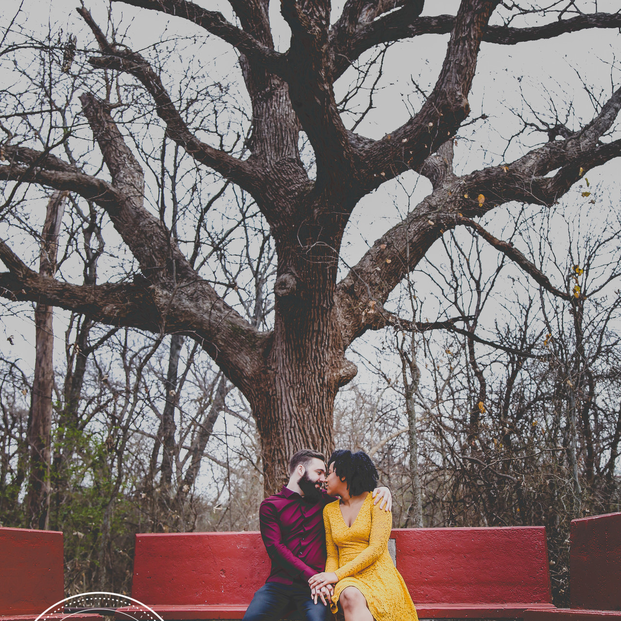 Engaged Couple Sitting in Front of Old Tree