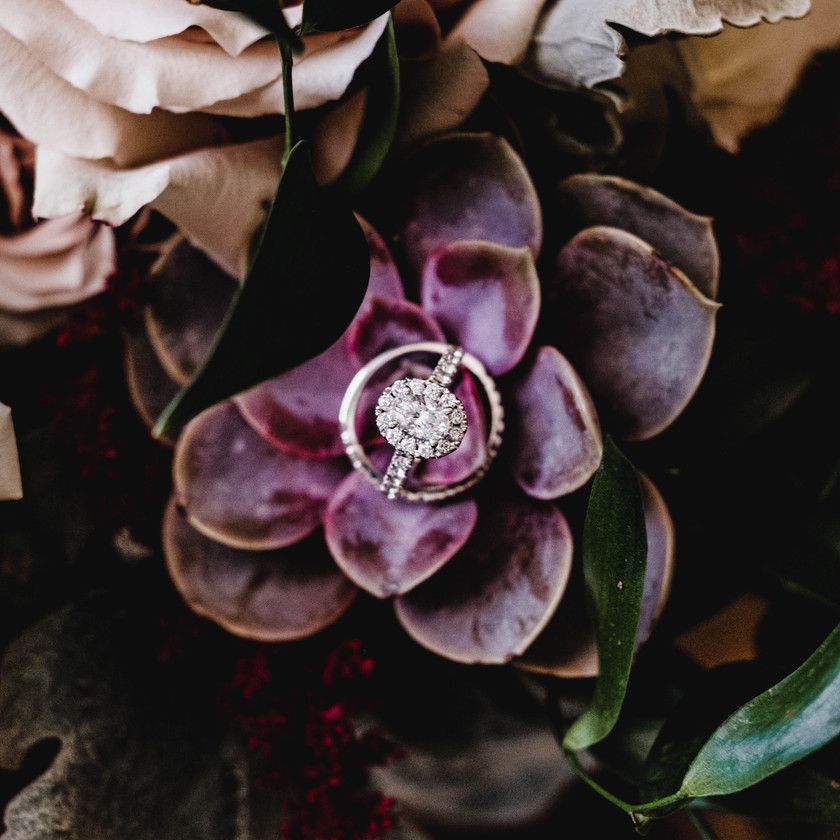 Diamond Ring setting on a succulent plant