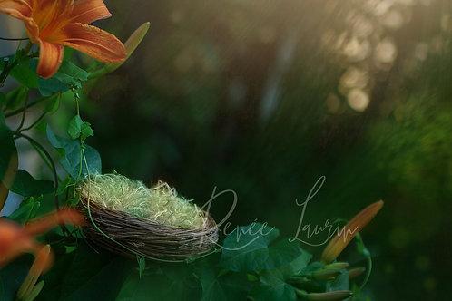 Newborn Nest Digital Backdrop