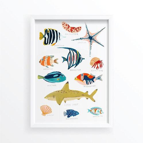 Fiji Sea-life