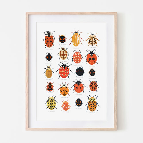 Ladybird Identification