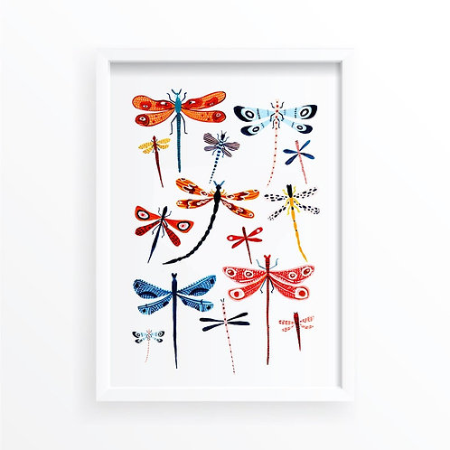 Dragonfly Collection