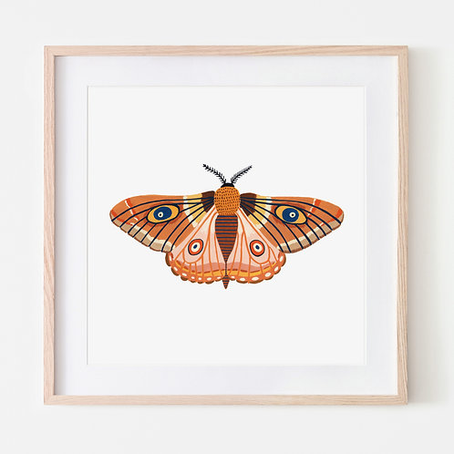 Fall Moth