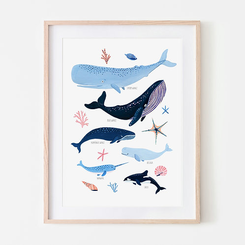 Whale Species