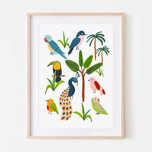 Birds of the Rainforest