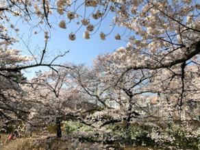春は肝臓の季節