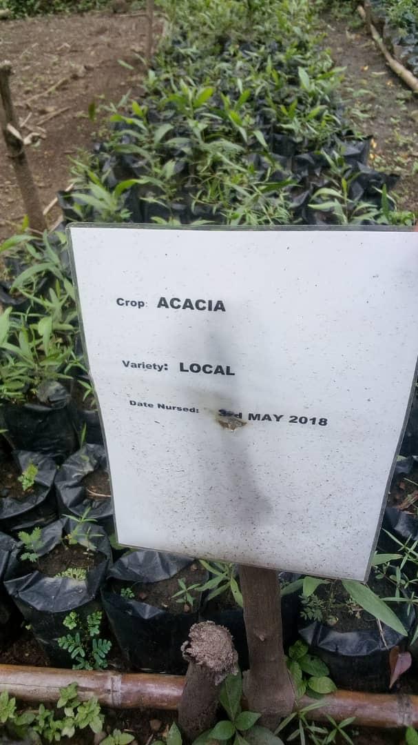 Pic 3 Acacia.jpg