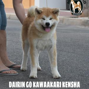 Dairin ( 5 meses)