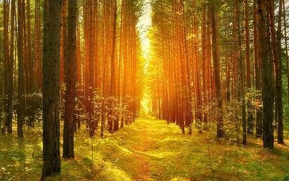 kartinki24_ru_forest_161.jpg
