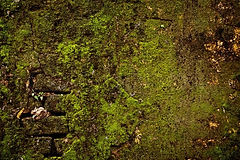 1524877-stone-wall-covered-with-moss-tex
