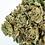 Thumbnail: Hillside Herbs Forum GSC  light dep