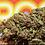 Thumbnail: Roganja Jaeger OG full term