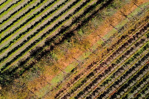 JS462-Vineyard Vines