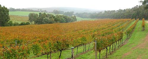 Autumn Vines, Margaret River
