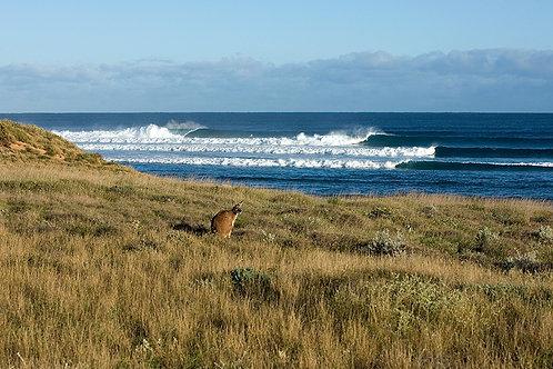 JS357-Locals Surf Check