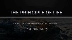 The Principal of Life - Sanctity of Human Life Sunday