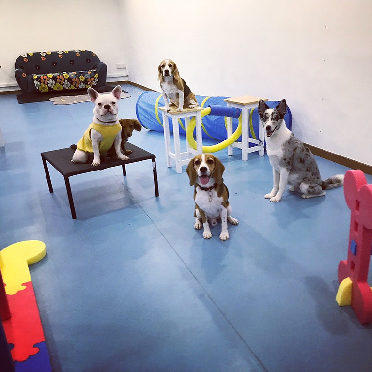 Just for Fun Agility Games