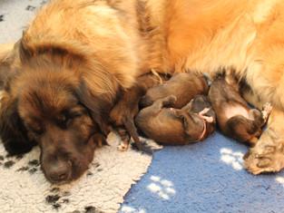 Pups twee weken