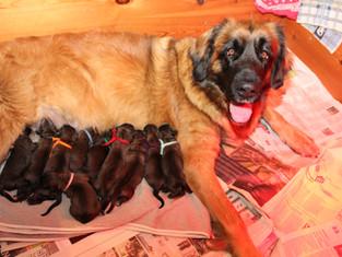 Pups geboren