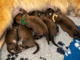 Pups al weer een week oud!