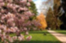 Credit-Westonbirt-Arboretum--Forestry-Co