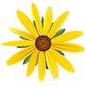 Yellow Daisy One_edited.png