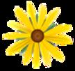 daisy transparent 2.png