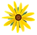 daisy transparent 2.png