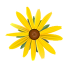 little yellow flower.png