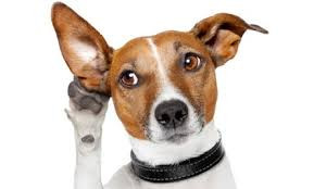 """What's up with the whole """"alpha dog"""" thing?"""