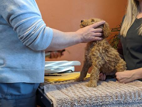 Puppies visit the vet!