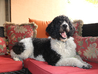 Creating Confident Puppies - 3 tips to get you started off right.