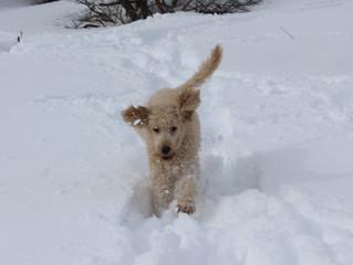 Help! My dog always jumps on me!
