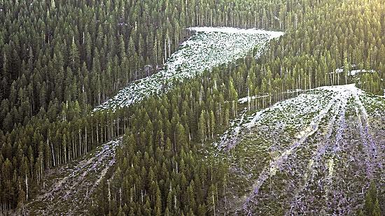 Shasta Logging