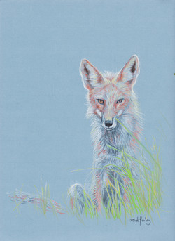 fox corrected 001.jpg