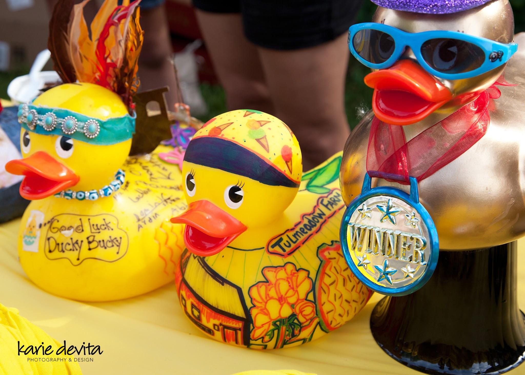 Duck_2676