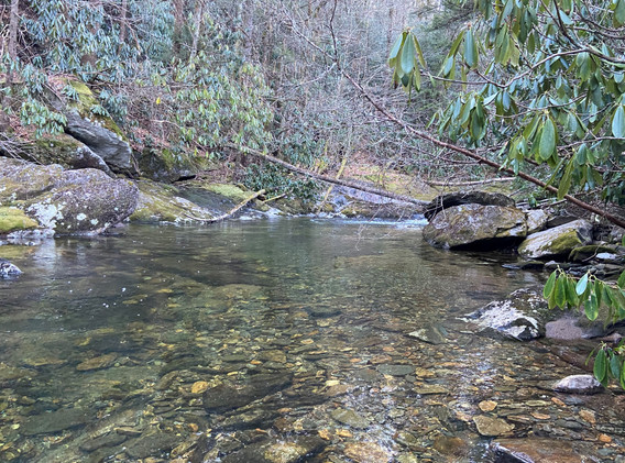 Wild Trout section of WF of Pigeon just below Beech Gap