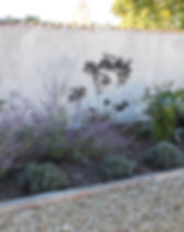 COURTYARD PLANTING .jpeg