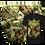 "Thumbnail: Dysmorphic Demiurge ""Derealization"" BUNDLE #2 (CD+T-Shirt+Poster+Flag)"