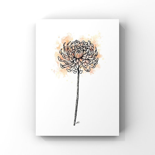 Chrysanthemum (November's Flower)
