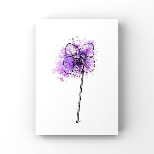 Violet (February's Flower)