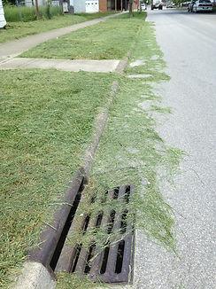 grassinstreet.jpg